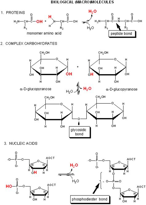 carbohydrates nucleic acids bc preface introduction to biochemistry