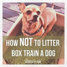 litter box a yorkie 1000 images about teacup yorkie puppy on beds pet beds and yorkie