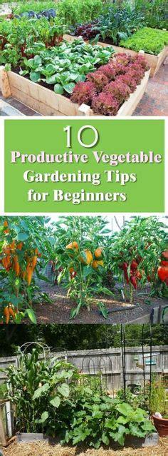 A Walk In The Vegetable Garden Vegetable Garden Gardening For Beginners Vegetables