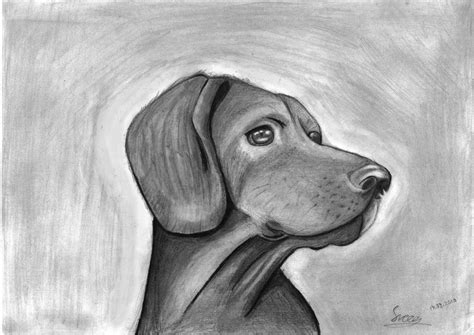 drawing of a sketch of a by sveeg on deviantart