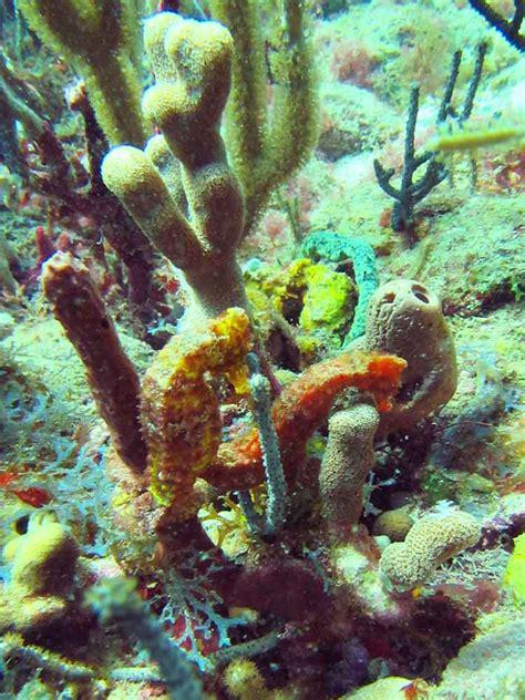 glass bottom boat grenada grenada tropical travel girl
