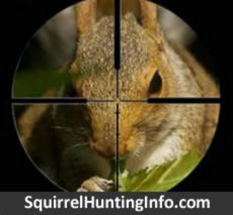 backyard squirrel hunting 25 unique squirrel hunting ideas on pinterest hunting tips survival classes and