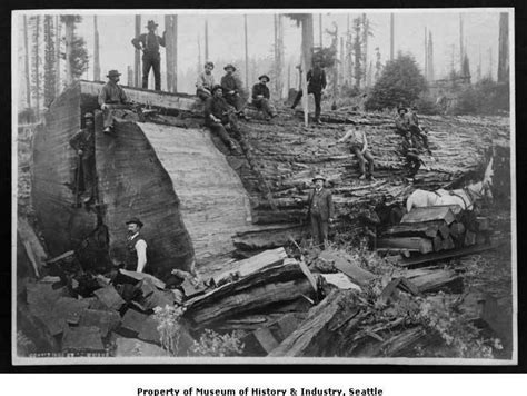 scfc history of forest industry photos a tale of the northwest s logging past beaumont