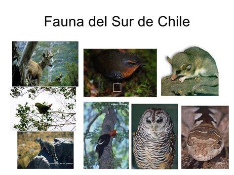 fauna de la zona sur chile en imagenes fotos animales zona sur de chile chile zona sur