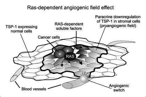 Midbass Genetic Cr 65 oncogenes and angiogenesis regulation of