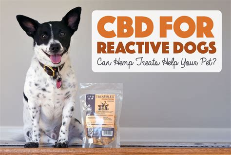 cbd for dogs cbd for reactive dogs can hemp help your pet the