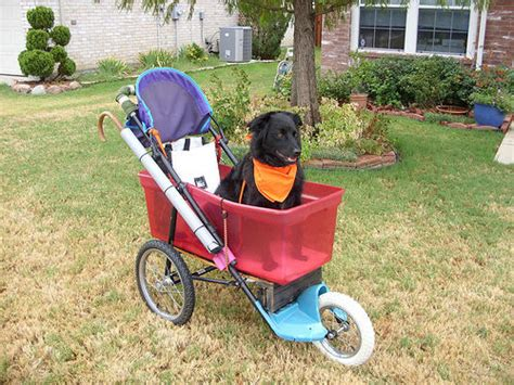 strollers for large dogs awesome stroller made from a used stroller
