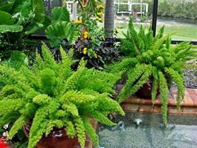25 best ideas about florida landscaping on pinterest