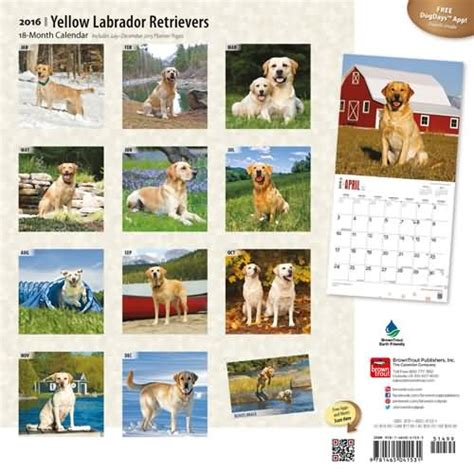 Calendar Labs 2016 Labrador Calendars 2016 Black Yellow Chocolate Labs