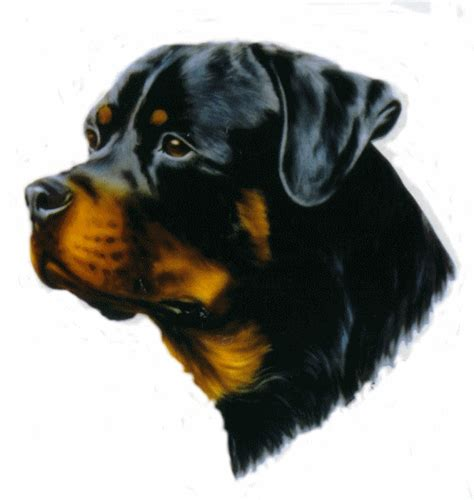rottweiler direct rottweilers animated images gifs pictures animations 100 free