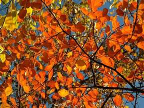 fall colors 2017 fall foliage 2017 the best time to see leaves change in