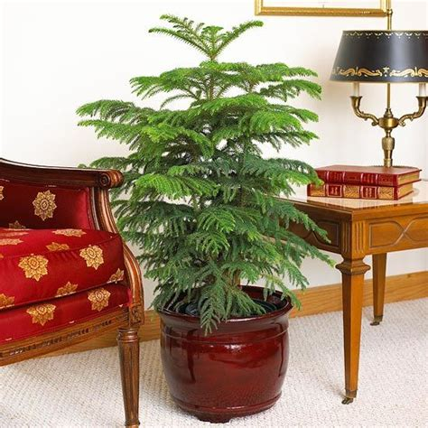 indoor plants no light 20 best house plants you can grow
