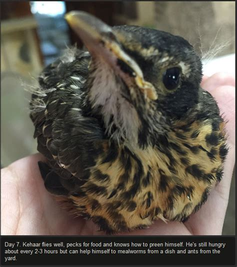 injured baby bird makes a full recovery 10 pics
