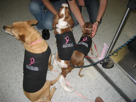 mammary tumor removal cost penn vet current status and updates