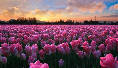 immagini di fiori per desktop scarica gratis i migliori sfondi per i tuoi dispositivi