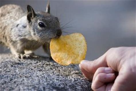 gabbia di scoiattolo come fare una gabbia di scoiattolo russelmobley
