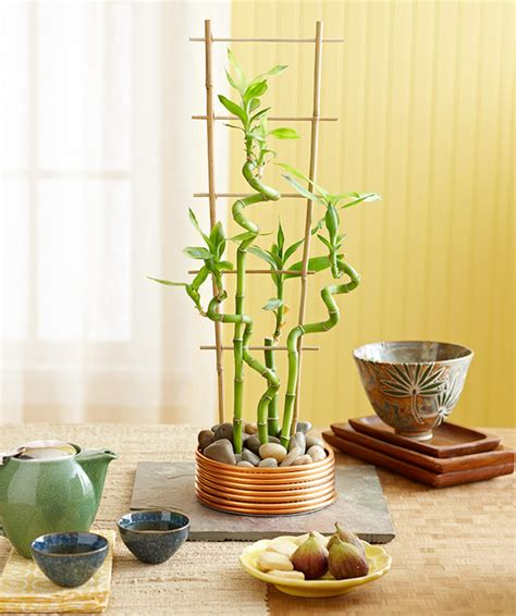 indoor bamboo plant container