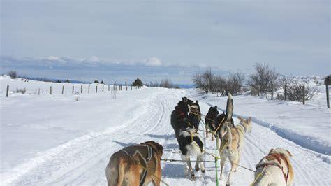 mush sled mush on experience idaho on a sled visit idaho