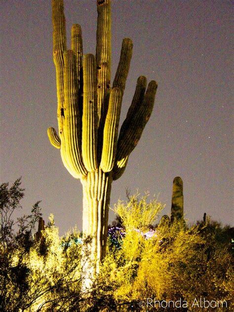 az desert botanical garden sonoran lights at desert botanical garden arizona