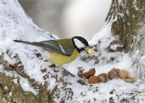 a guide on what to feed birds in winter love the garden
