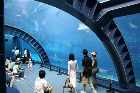 japanese aquarium okinawa churaumi aquarium aquarium in okinawa island