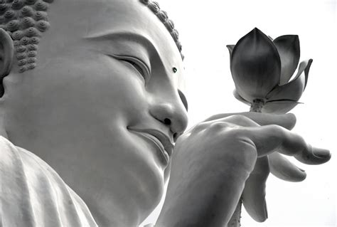 buddhism lotus flower meaning lotus flower meaning and significance all the world