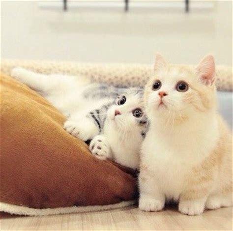 100 gambar dp bbm kucing lucu menggemaskan teknologi terbaru