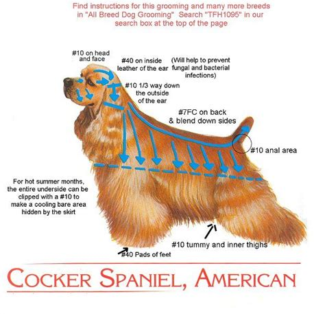 what s your style a guide to america s most common home cocker cut instructions for groomer all creatures great