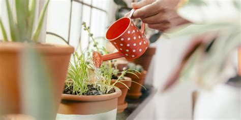 how to bring a dead plant back to life how to revive a dying houseplant how to bring a nearly
