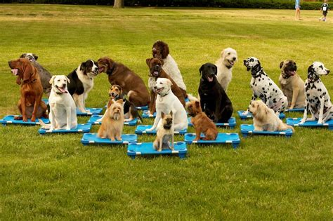 obedience classes for puppies classes your best friend llc your best friend llc