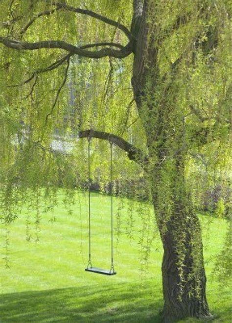tree swing photography empty swing hangs from tree branch in garden royalty free