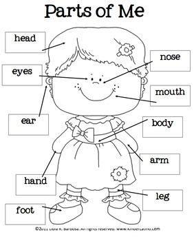 best 25 body parts ideas on pinterest english