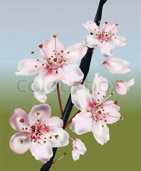 Realistic Cherry Blossom Branch Stock Vector Colourbox Cherry Blossom Branch