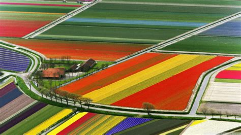 netherlands tulip fields most photographed dutch flower fields world for travel