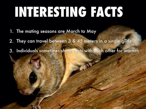 best 28 facts about flying squirrels a few