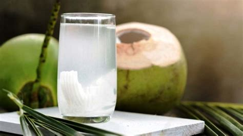air kelapa kaya  manfaat  penggnati air putih informasi terbaru seputar lifesytle