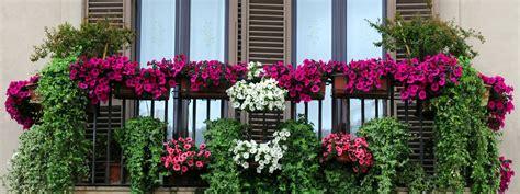 vasi balcone l impianto di irrigazione automatico per i vasi in balcone