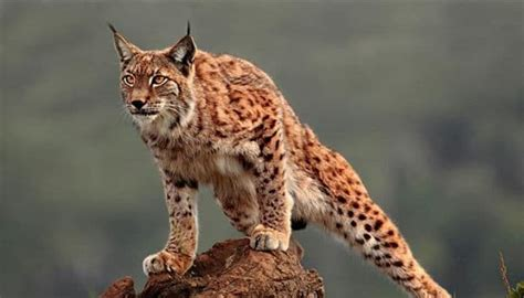 imagenes de animales que viven en el desierto animales que viven en el desierto cu 225 les son 161 lo m 225 s
