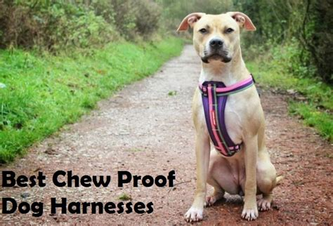 chew proof harness best chew proof heavy duty indestructible harness reviews
