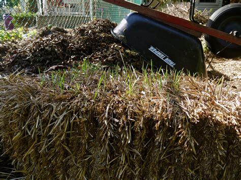 hay vs straw in the garden which is better garden