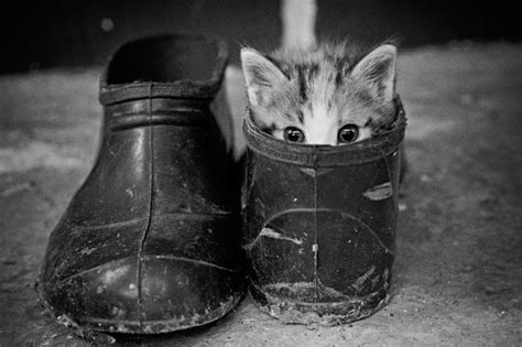 kittens shoes kitten in a shoe 1funny