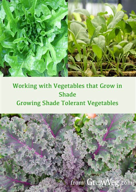 vegetables 3 times a day 501 best images about growing your own vegetables on
