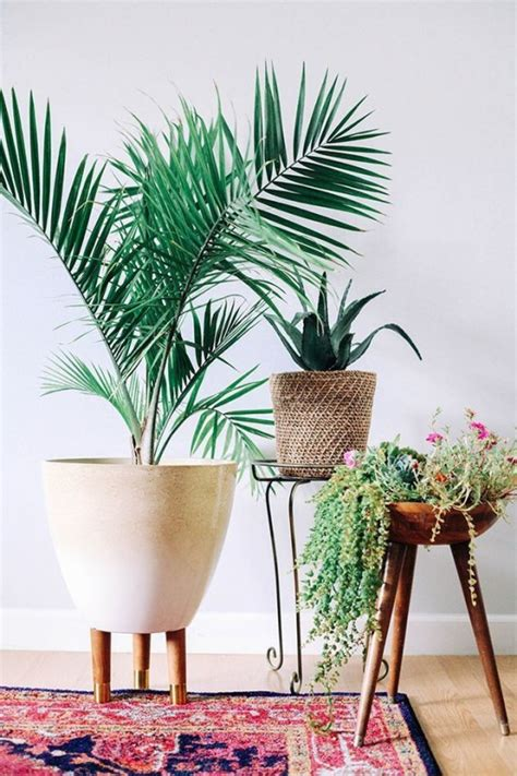best house plant the 10 best air purifying house plants the honeycomb home