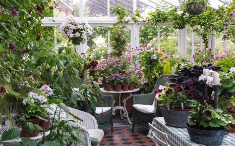 grow  favourite flowering houseplants