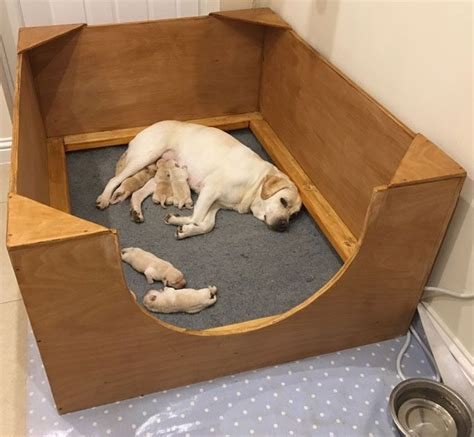 whelping puppies 17 best ideas about whelping box on breeders doggie play pen and