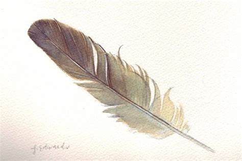 feather 123 sparrow feather original watercolour nightly