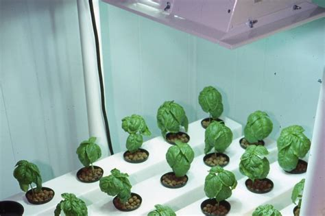 how much light do plants need to grow how much light do you need garden culture magazine