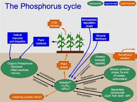what color is phosphorus rock phosphate fertilizer garden myths