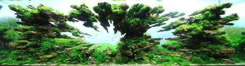 aquascaping is underwater unlike anything you ve