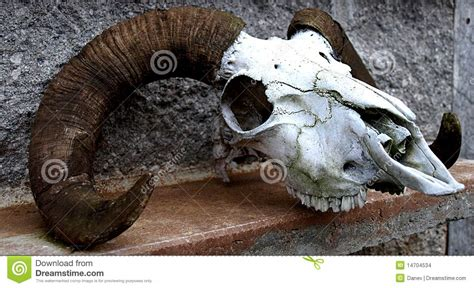 Midwest House Plans sheep skull stock photo image of teeth nature midwest